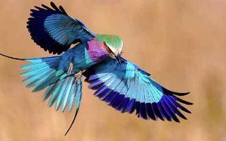 Cele mai frumoase păsări din lume. 30 de imagini fascinante