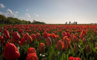 Simfonia culorilor: Cele mai frumoase câmpuri de lalele - FOTO