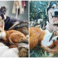 15 imagini cu animale care au crescut împreună. Au rămas la fel de buni prieteni!