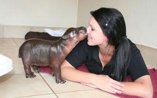 10 animale în miniatură care te fac să zâmbești. Sunt incredibil de drăguțe!