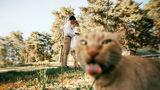 De râsul lumii: 35 de pisici obraznice care distrug pozele perfecte