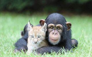 Alianţa animalelor: 20 de imagini care dovedesc că prietenia sfidează legile naturii