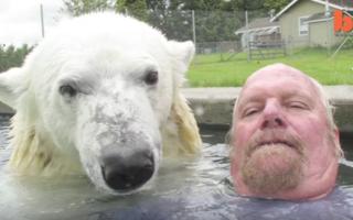 Aventurile lui Grizzly Man: Omul care se bălăceşte cu ursul polar - VIDEO