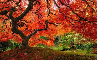 Simfonia culorilor. Cum arată cei mai impresionanţi copaci din lume