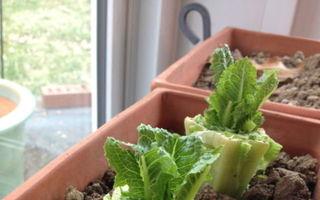 7 legume care se regenerează din resturi. Le poți crește în bucătărie!