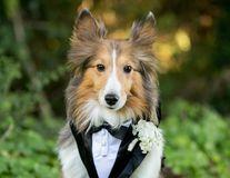 Fură inima oricui! 10 cei mai simpatici invitaţi de onoare la nuntă