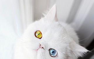 Pam Pam, pisoiul cu ochi hipnotizanți, de culori diferite