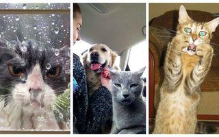 Reginele dramei. 15 pisici care ar merita un Oscar