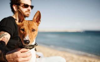 7 motive pentru care iubitorii de câini sunt parteneri minunați