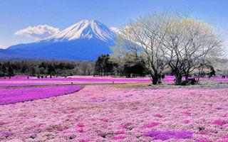 Explozie de culoare. 15 cele mai frumoase câmpuri cu flori sălbatice