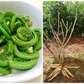 5 legume ciudate de care sigur nu ai auzit până acum