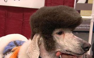 Ar trebui să-şi concedieze frizerul! 20 de animale cu cele mai amuzante tunsori