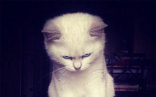 Revolta animalelor! Cele mai furioase 25 de pisici din lume