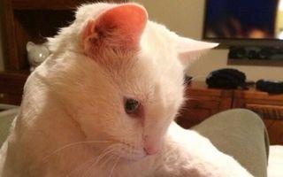 25 de pisici surprinse în cele mai ciudate ipostaze