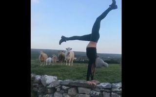 A făcut yoga în aer liber şi a avut cei mai tari spectatori! - VIDEO