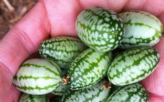 18 fructe exotice de care nu ai auzit până acum