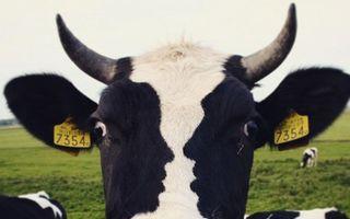Tu ce vezi prima oară? 22 de imagini înşelătoare, dar amuzante