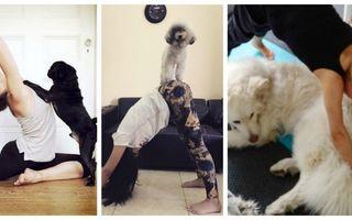 Mai fă yoga dacă poţi! Cele mai amuzante 30 de imagini cu câini care se bagă în sufletul tău
