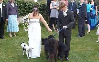 Dezastru la nuntă. 25 de imagini șocante care te fac să râzi în hohote