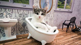 Clanul Kardashian are concurenţă: Un reality show cu pisici domină audienţele!
