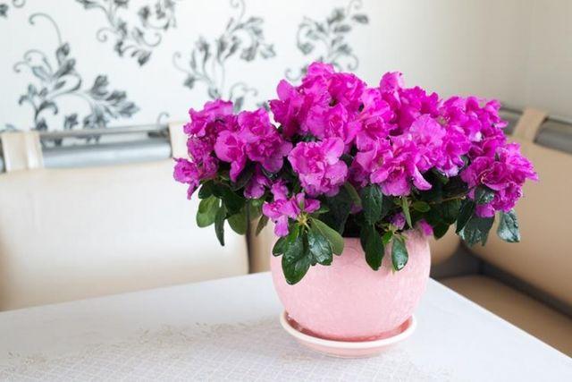 6 plante otrăvitoare pe care le-ai putea avea acasă