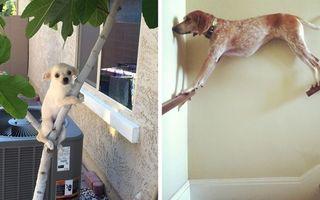 Şi câinii devin ciudaţi! 20 de fotografii de tot râsul