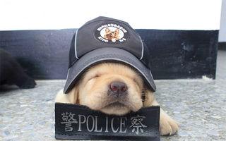 Poliţia face angajări: Noii recruţi sunt vedete pe internet