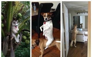 Ce-o fi în mintea lor? 20 de câini surprinşi în cele mai ciudate ipostaze