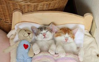 Pisicii frăţiori dorm ca nişte bebeluşi în patul lor