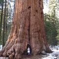 Primăria i-a tăiat un copac vechi de 30 de ani. S-a răzbunat într-un mod genial!
