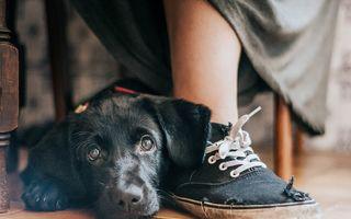 De pus în ramă: Cele mai frumoase poze cu câini