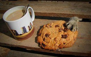 25 de imagini amuzante cu animale prinse la furat: Nu se pot abţine!