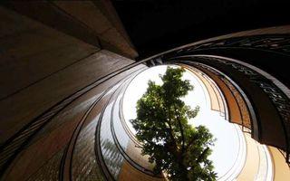 Blocul cu copaci: A fost construit fără să se taie vreun arbore