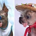 Câinele fashionist: 5 ţinute cu care se remarcă