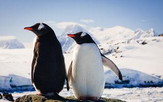 Pinguinul care și-a prins partenera înșelându-l. Iată cum a reacționat!