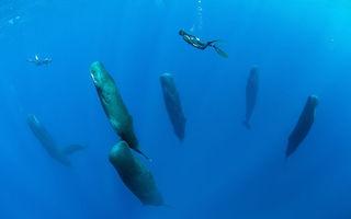 Cum dorm balenele? Imagini extrem de rare, surprinse de un fotograf