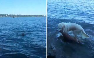 Video incredibil: Câinele care a salvat un pui de căprioară din mijlocul unui lac