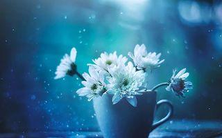 Frumuseţea lucrurilor simple din viaţa noastră: 30 de imagini cu flori care îţi încântă ochii şi inima