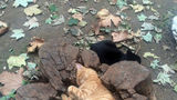 Pisicile îşi găsesc culcuş oriunde. 20 de fotografii amuzante cu pisici înghesuite în spaţii mici