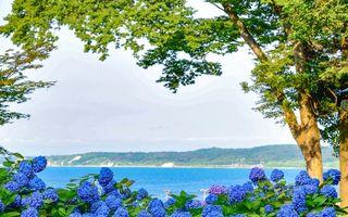 Festivalul hortensiilor din Japonia. 20 de fotografii spectaculoase