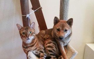 Ce iese când câinii imită pisicile? 35 de fotografii de tot râsul