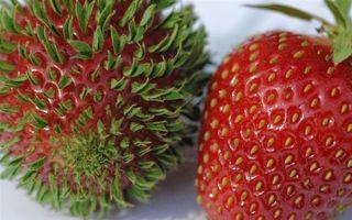 Par de pe altă planetă! Cele mai bizare fotografii cu fructe şi legume care încolţesc aiurea