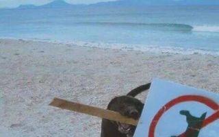 20 de animale amuzante care nu țin cont de reguli