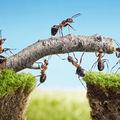 Ce înseamnă când visezi furnici