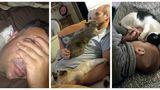 30 de fotografii cu oameni care au urât pisicile, dar acum nu pot trăi fără ele. Sunt tare amuzante!