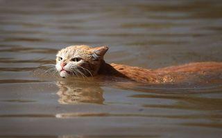 Cum a devenit o pisică simbolul rezistenţei împotriva uraganului Harvey
