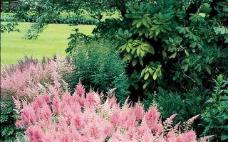 10 plante perene care îți vor transforma grădina într-o oază de liniște