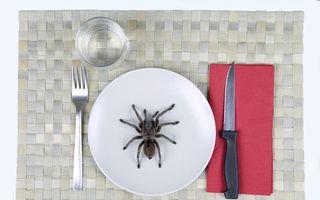 Ostatici la domiciliu: Un cuplu a fost terorizat de un păianjen cât o farfurie