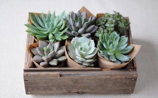 7 plante de apartament care rezistă chiar dacă le neglijezi