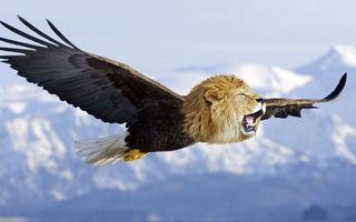 Pisicile cu aripi: 40 de imagini ciudate cum n-ai mai văzut